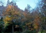 December 2013 - Woods 02 by HermitCrabStock