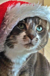 What Christmas AGAIN? FFS! by Nergling