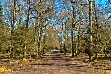 Forest Track by Nergling