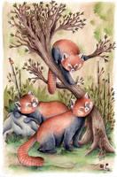 Red Pandas by Pascalou