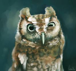 Ooooowl by Ludmila-Cera-Foce