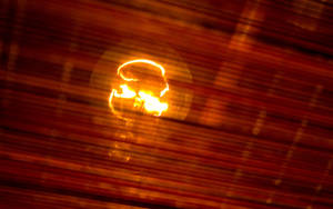 the flashbulb by blackasmodeus