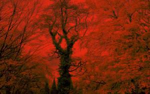 transylvanian autumn by blackasmodeus