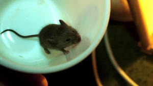 poor little baby mouse by blackasmodeus