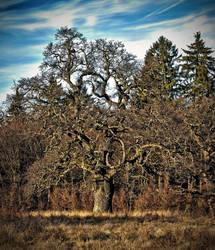 breite oak by blackasmodeus