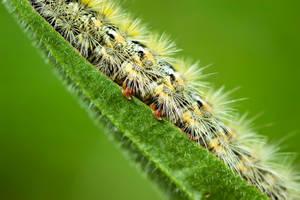 caterpillar detail by blackasmodeus
