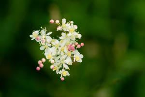 flowers by blackasmodeus