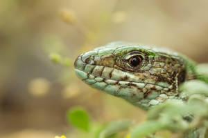 lizard portrait by blackasmodeus
