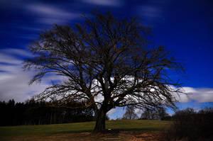 tree by duckstance