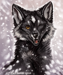 Black fox by FlashW