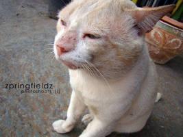 THE CAT by ZpringFieldz
