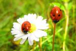 De fleur en Tige by Sazan-Benares