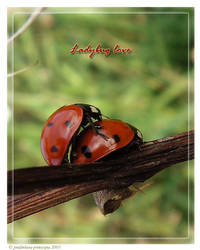 Ladybug love by pralinkova-princezna