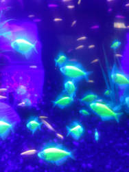 glow fish. by lostwolff