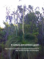 Fork bush? by k13rayuuki