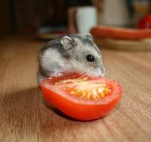 Hamster by glittra01