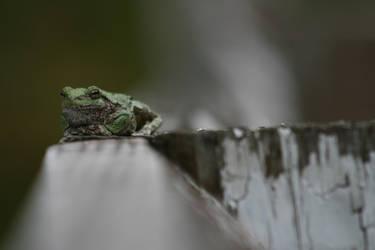 Wisdom Frog by StripedDemon
