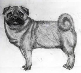 Pug! by SaitirWolf