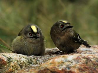 Little birds of doom by madhailstorm