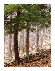 Catskill Mountains Nature, 1 by severfire