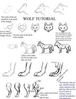 Wolf Tutorial by apocalypse-song