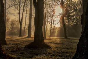 Foret3 by hubert61