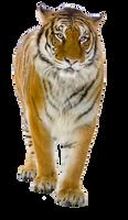 Tiger PNG by LG-Design