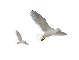 Birds PNG by LG-Design