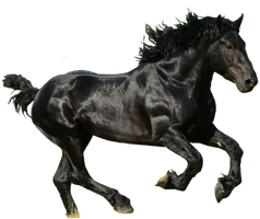 Black Horse PNG by LG-Design
