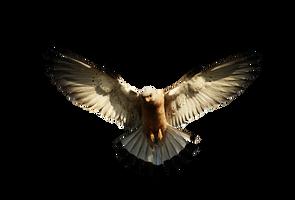 Eagle 2 PNG by LG-Design