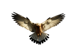 Eagle 2 PNG by LG-Design