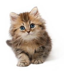 Kitten PNG by LG-Design