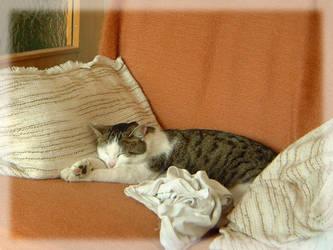 Sleeping Cat by MutantPiratePrincess