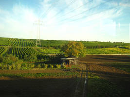 Vineyard on the way to Wiesbaden by MutantPiratePrincess