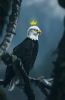 The king of birds. by Zary-CZ