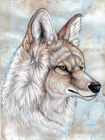 Coyote by Gray-Ghost-Creations