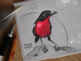 # 31 - Crimson-breasted Shrike by Loisa
