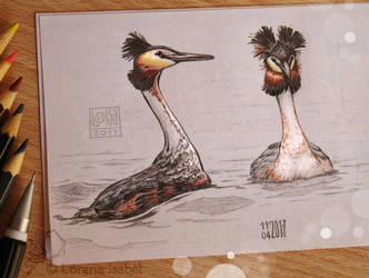 # 33 - Great Crested Grebe - by Loisa