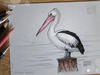# 36 - Australian pelican - by Loisa