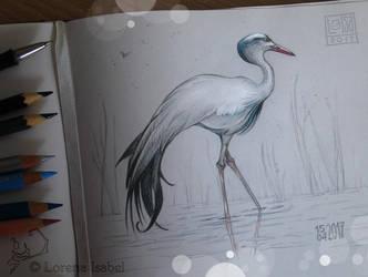 # 37 - Blue crane - by Loisa