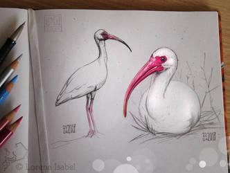 # 40 - White Ibis - by Loisa