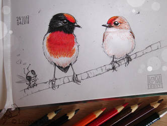 # 41 - Red capped Robin - by Loisa