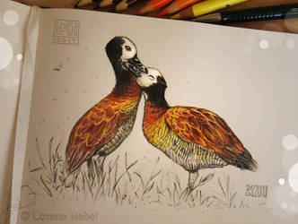 # 42 - Whistling duck - by Loisa