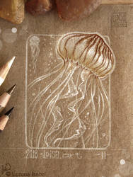 11 - Jellyfish by Loisa