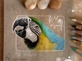 19 - Macaw by Loisa