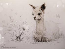 Little Llama by Loisa