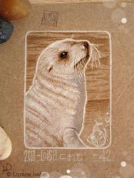 42 - Antartic Fur Seal by Loisa