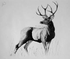 Deer by Loisa