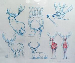 Mule Deer study page by Loisa