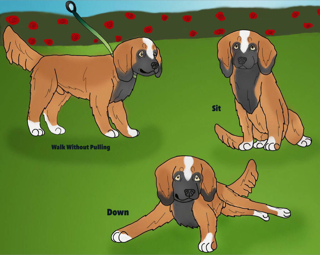 Denver Puppy Obedience Training By Waggintails Rescue On Deviantart